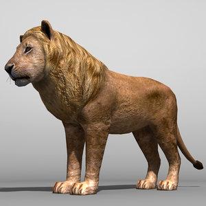 lion cat feline obj