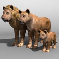 lion family 3d max