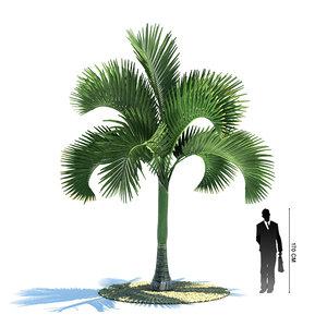 3d exotic tree carpoxylon macrospermum