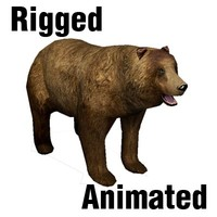 rigged bear animation 3d model