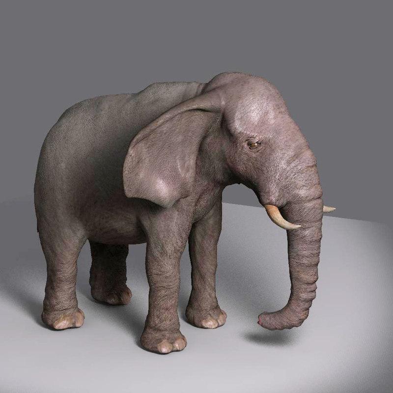 elephant movie max