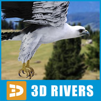 bellied sea eagle 3d 3ds