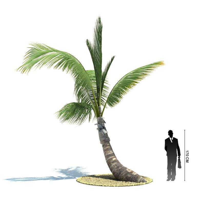 exotic tree cocos nucifera 3ds