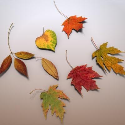 autumn leaves c4d