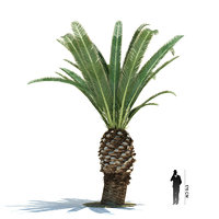 exotic tree phoenix canariensis 3ds