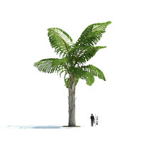exotic tree caryota gigas 3ds