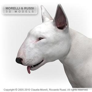 c4d bull terrier