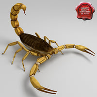 Egyptian Scorpion