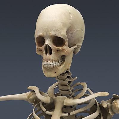 Human Skeleton Nose Anatomy 3d Model