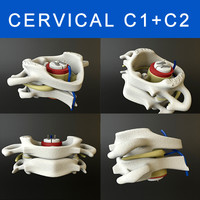 3ds max c1 c2 vertebrae