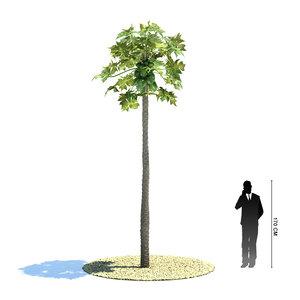 exotic tree carica papaya 3d model