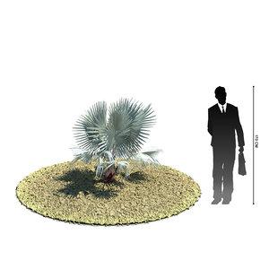 3d exotic tree bismarckia nobilis model
