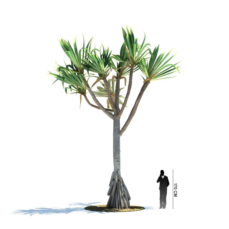 3d exotic tree pandanus utilis model