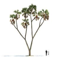 3ds max exotic tree hyphaene thebaica