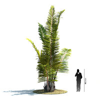 exotic tree raphia farinifera 3d model