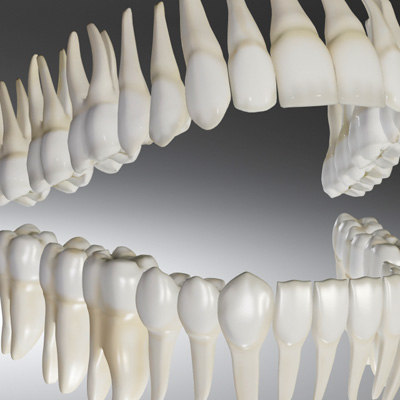 human teeth model, Human Body