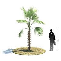 exotic tree zombia antillarum 3d 3ds
