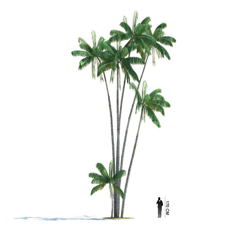 3ds max exotic tree oncosperma tigillarium