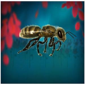 3d honey bee model