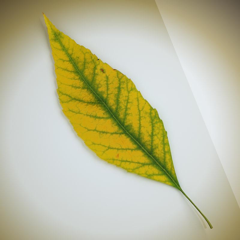 3ds max autumn leaf