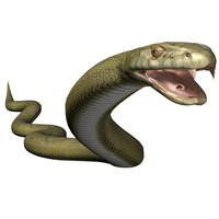 anacondas snakes 3d model