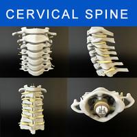 cervical bones max