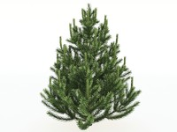 pine small 3d max