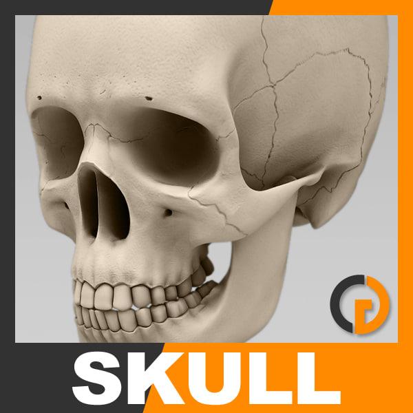 human skull - nose anatomy, Skeleton