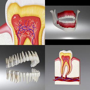 3d teeth tooth
