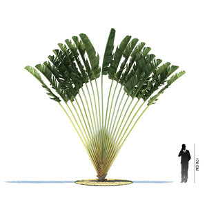 3d 3ds exotic tree ravenala madagascariensis