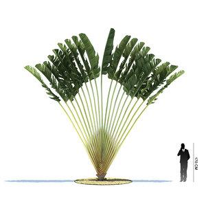3d 3ds exotic tree ravenala madagascariensis
