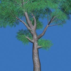 tree conifer max free