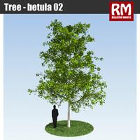 Tree - betula 02