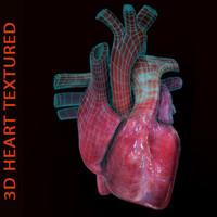 3D Heart Textured