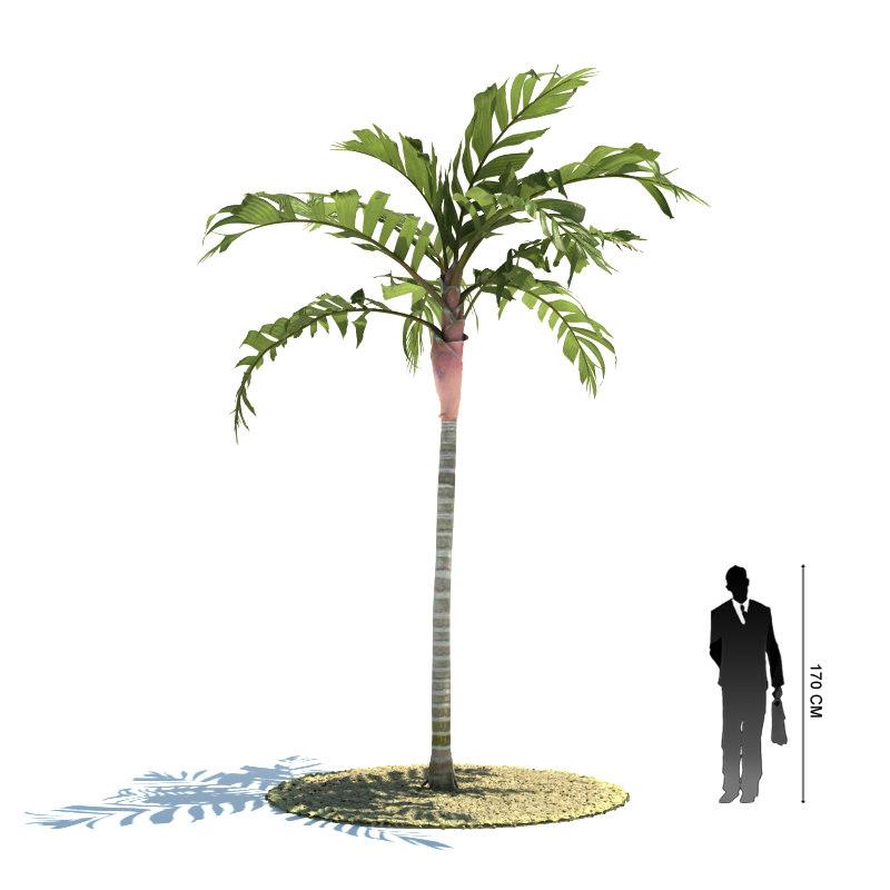 exotic tree areca vestiaria 3ds