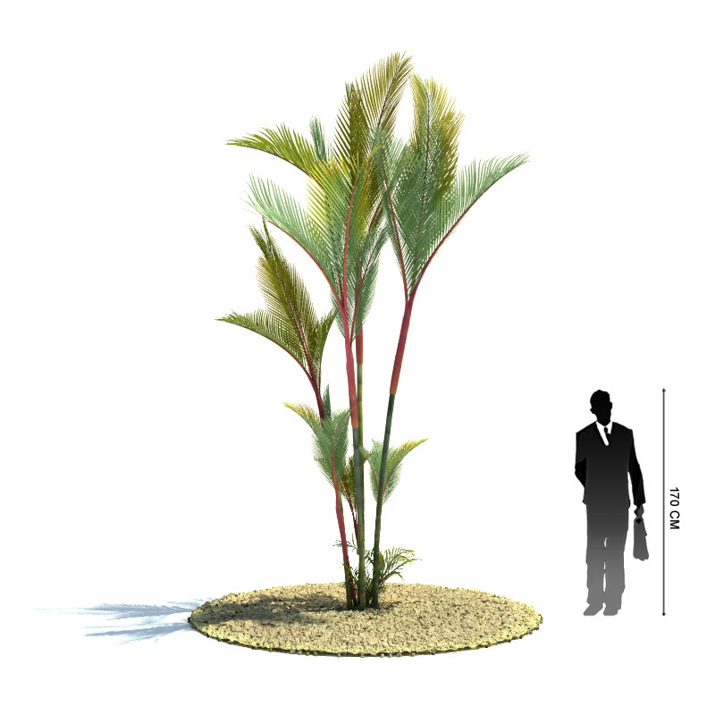 exotic tree cyrtostachys renda 3d 3ds