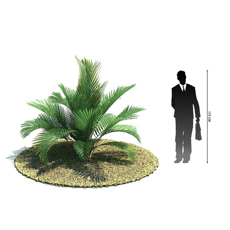 exotic tree chamaedorea cataractum 3ds