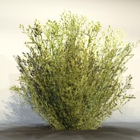 Grass_23