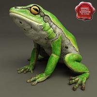 3d model frog hyla arborea