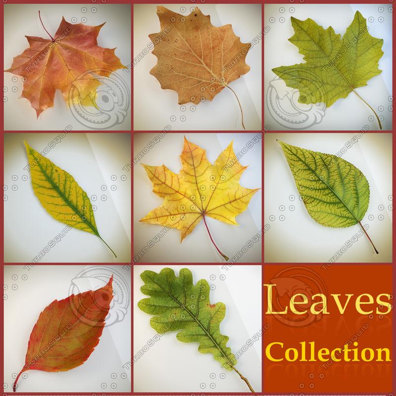 3d model realistic autumn leaves leaf