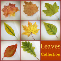 3d model realistic autumn leaves leaf