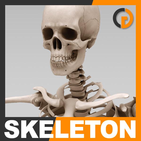 Skeleton_th01.jpg
