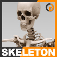 3d human skeleton - skeletal