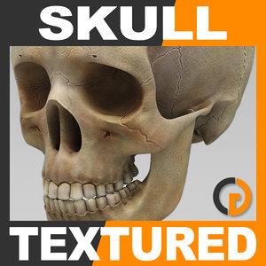 maya human skull - skeletal