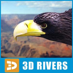 steller s sea eagle 3d model