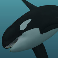 3d photorealistic killer whale