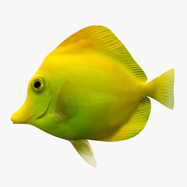 3dsmax yellow tang fish