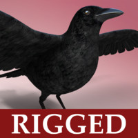 Crow - Rigged