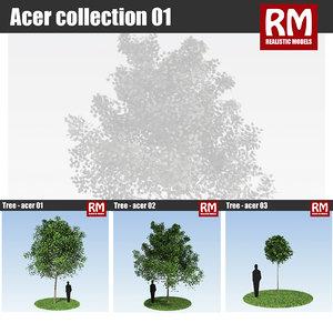 trees acer 3d model