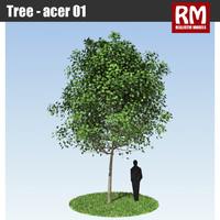 Tree - acer 01